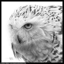 stephen walton fine art snowy owl