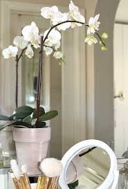Bathroom Flowers And Plants Tips For Styling The Bathroom Vanity Best Friends For Frosting