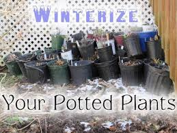 Sports Authority Winter Garden - 120 best cleaning up the garden images on pinterest garden ideas