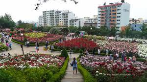bucheon rose garden when in south korea