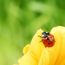 pests prevention for indoor and outdoor plants powerscourt