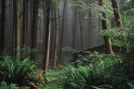 Oregon forest images The most beautiful forests of oregon that oregon life jpg