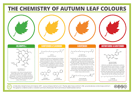 Shades Of Orange Colour Compound Interest The Chemicals Behind The Colours Of Autumn Leaves