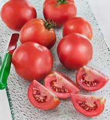 early tomato early harvest high yields