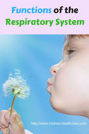 best 20 respiratory system ideas on pinterest projects