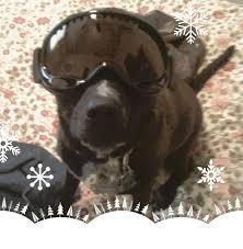 best of oug top dog halloween costumes denver dogs u0026 boulder