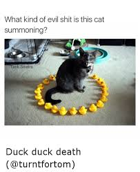 Evil Cat Meme - what kind of evil shit is this cat summoning tank sinatra duck