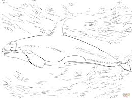 sea animals coloring pages for kids printable free with orca