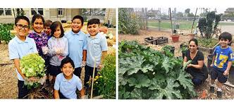 blossoming into a sustainable garden san diego unified