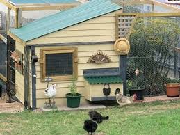 16 best chicken coops images on pinterest best chicken coop