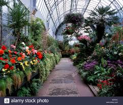 winter garden auckland domain stock photo royalty free image