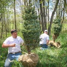 woodlake tree farm the best selection of conifers in garrett