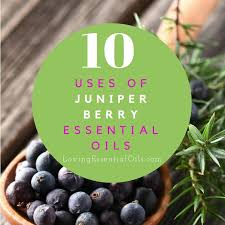 essential oils for fragrance ls 10 uses of juniper berry essential oil