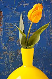 yellow vase single yellow tulip in yellow vase photograph by garry
