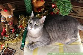 cat christmas how to make this your cat s christmas 7 steps with pictures