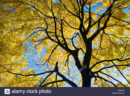 in fall autumn stock photos u0026 autumn stock images alamy