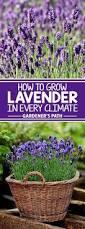 gardening tips best 25 gardening tips ideas only on pinterest gardening