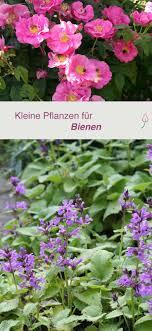 pflanzen fã r den balkon 2077 best garden images on flowers garden garden