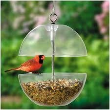 Backyard Wild Birds by Wild Bird Feeders Wild Bird Feeders Pinterest Wild Bird