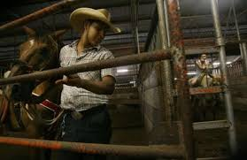 Texas Sale Barn Rising Costs Reining In Sales Of Texas Horses Houston Chronicle