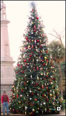 pinetum christmas trees our products
