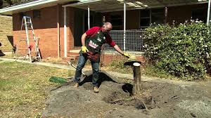 free removing tree stumps at tree stump big efdadfcce on home