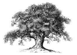 vintage clip and illustrations oak tree stock illustration