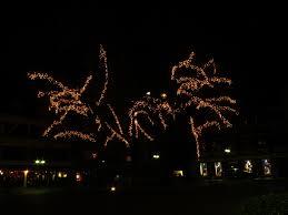 free images tree light decoration darkness