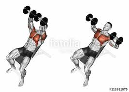 Incline Bench Muscle Group Dumbbell Bench Press While Lying On An Incline Bench Exercising