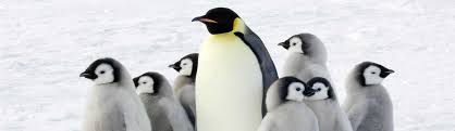 what is the origin of the word pengu oxford dictionaries