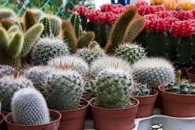 5 awesome indoor garden u0026 plant ideas institute of ecolonomics
