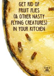 How To Rid Of Annoying Fruit Flies And Gnats In The Kitchen Mom - Small flies in kitchen sink