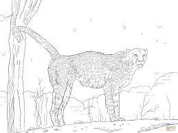 namibian cheetah coloring free printable coloring pages