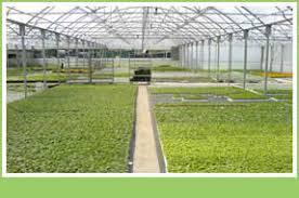 ornamental bedding pot plants wholesale nursery hyacinths