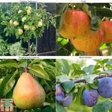 stone fruit trees thompson u0026 morgan