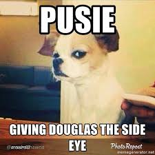 Dog Meme Generator - doug dog meme generator dog best of the funny meme