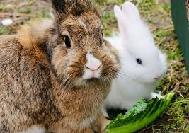 rabbit bunny best rabbit treats that are heathy and for your bunny