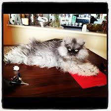Colonel Meow Memes - colonel meow know your meme