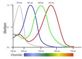 uv l short and long wavelength inside the colorful world of animal vision iflscience