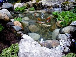 a koi pond for outdoor garden photograph by lingfai leung