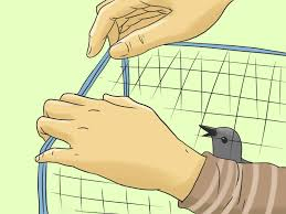 How To Scare Birds Away From Patio by 3 Ways To Protect Your Cherry Trees From Birds Wikihow