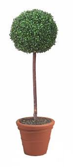 artificial topiary bay trees boxwood topiary tea tree and