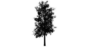 animated tree stock footage 471052
