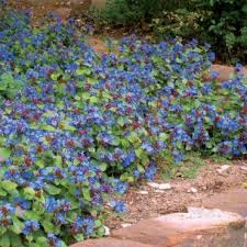 28 best colorado rock garden images on pinterest garden plants