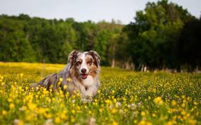 happy dog wallpaper hd 6797614