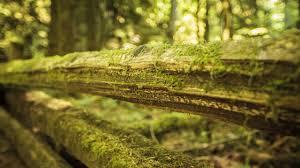 moss on wood wallpaper