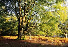 rhinefield appartments suggested new forest walks