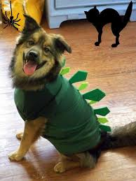12 funny and adorable pet halloween costumes homeyou