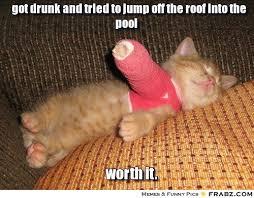 Cute Cat Meme Generator - 20 funny drunk cat memes funny pics story