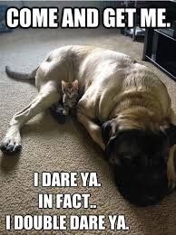 Dirty Adult Memes - funny meme dog little kitten picture funny dirty adult jokes